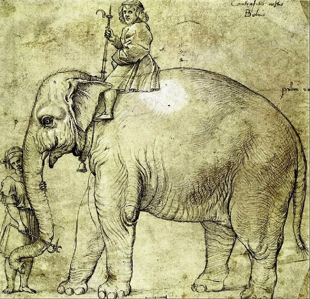 Drawing of Annone, the elephant of Pope Leo X, by Raphael